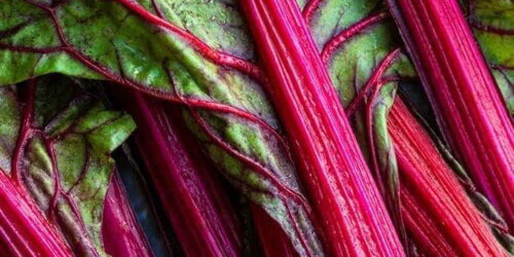 Rhubarb-500x295